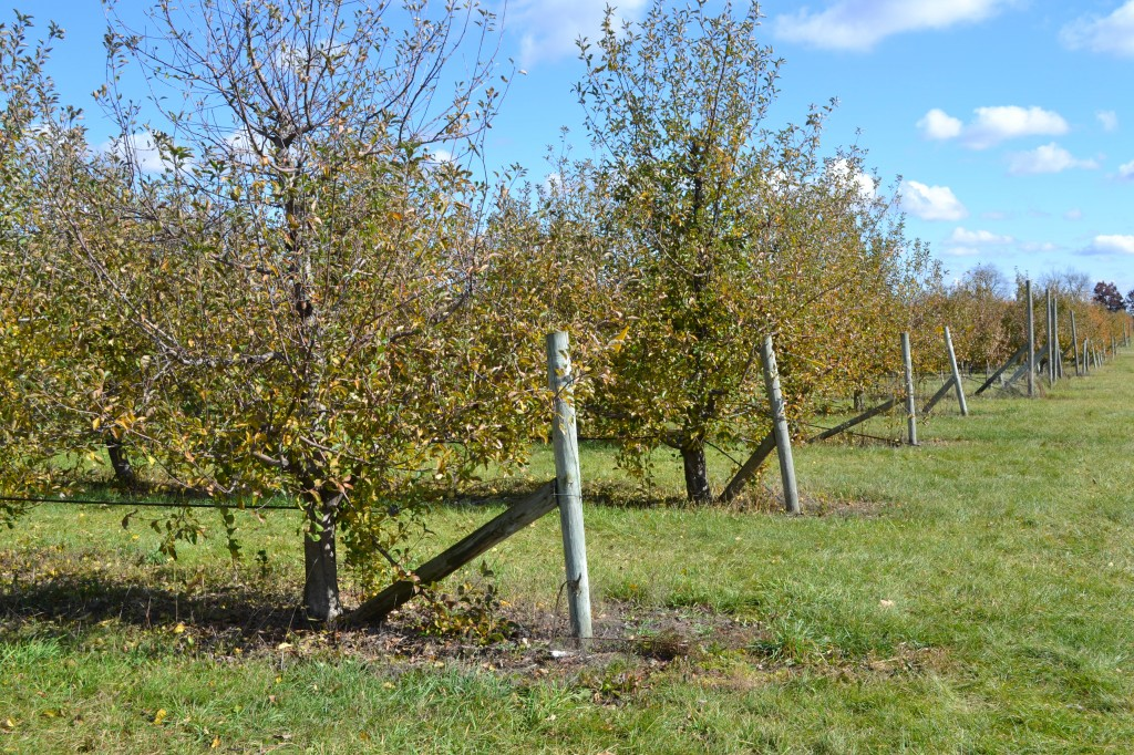Royal Oak Farm Orchards