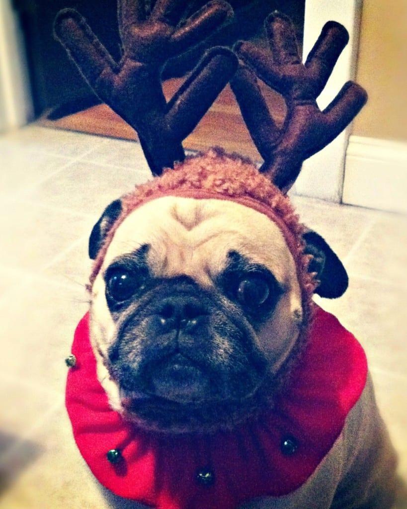 weezer dog christmas