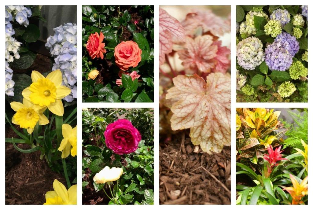 Chicago flower and garden show sarcastic cooking - Chicago flower and garden show 2017 ...